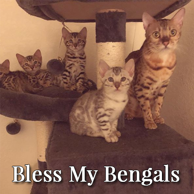 Bless My Bengals