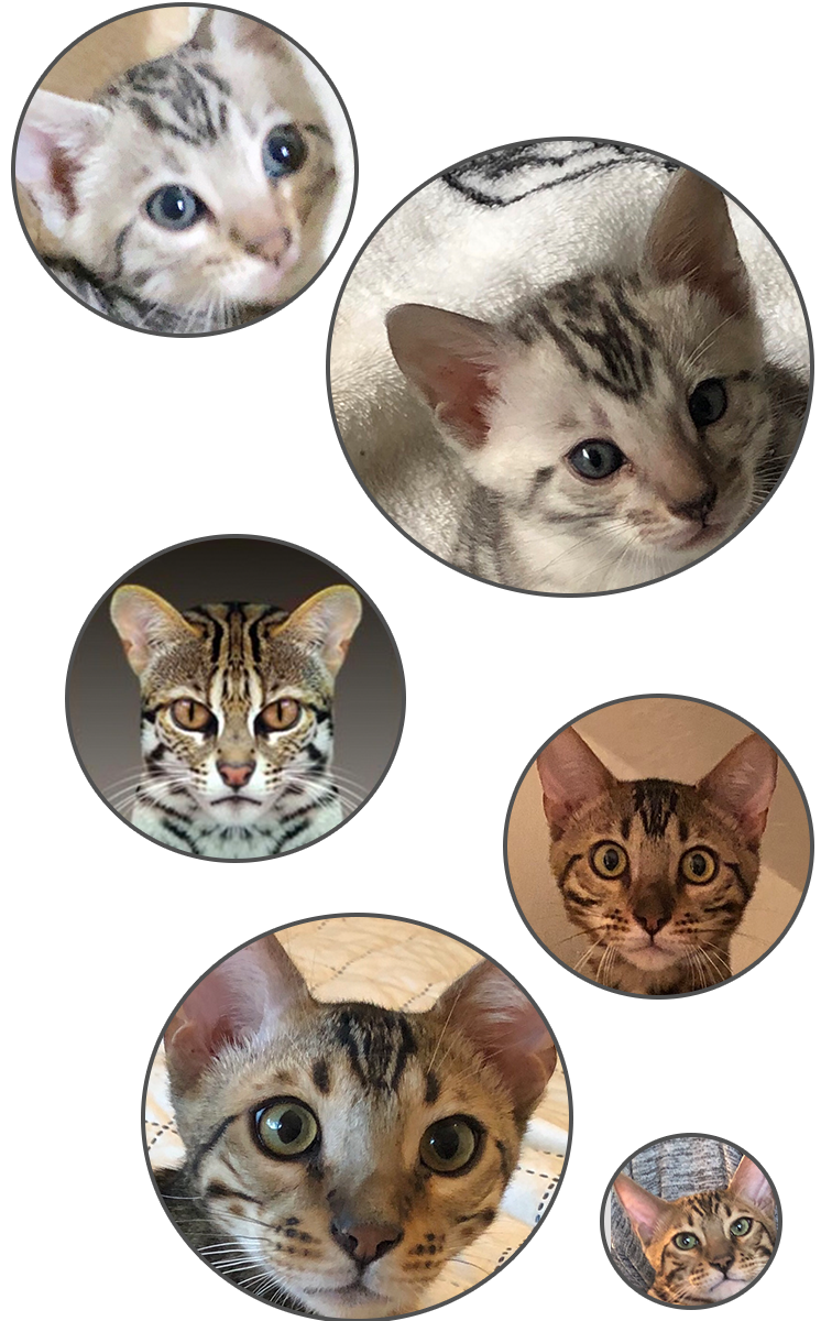 Cat Headshots